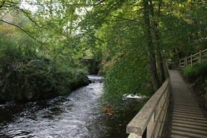 River Cefni The Dingle Nant y Pandy Nature Reserve